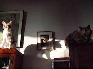 アルバムへの扉写真「おみくじの結果」 このアルバムに含まれる要素:ねこ、ネコ、モネ、ピカソ、鍋会、散歩、古民家、おっと
