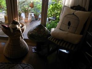 アルバムへの扉写真「かごの上のピカソさんと椅子の上の鳥かご」 このアルバムに含まれる要素:ねこ、ネコ、モネ、ピカソ、ベランダの春、おっと、バウルー、ホットサンド