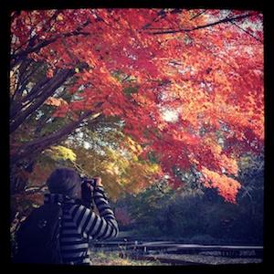 アルバムへの扉写真「四季の森公園の紅葉」このアルバムに含まれる要素:ネコ、モネ、ピカソ、ひいちゃんの命日、四季の森公園、横浜国際プール、山田富士公園、バンド忘年会、お昼休みウォーキング、大掃除、永ちゃん焼肉、せせらぎ公園
